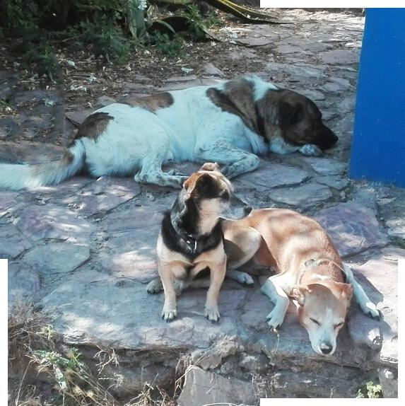 Os nossos cães