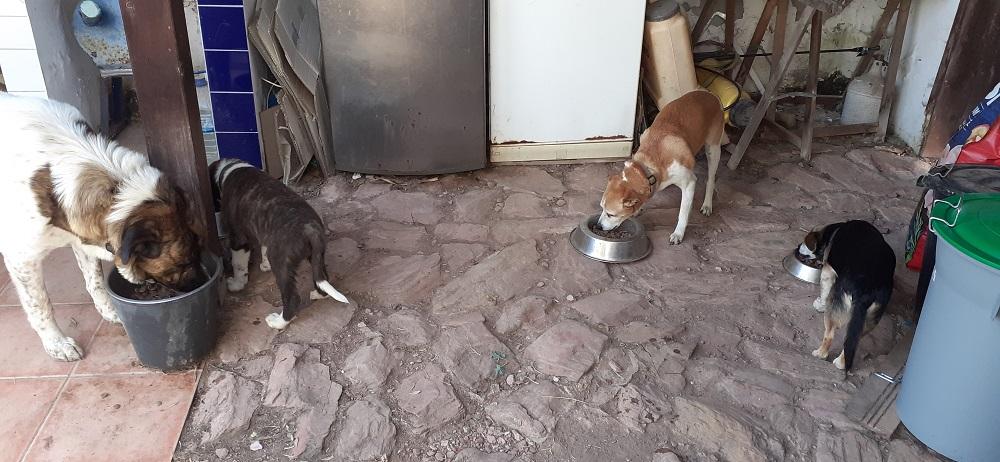 Samen eten